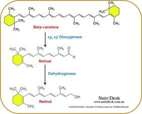 beta-carotene-to-retinol