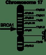 220px-BRCA1_en