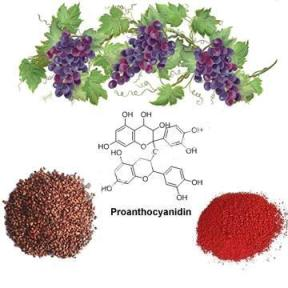 China_Grape_Seed_Extract